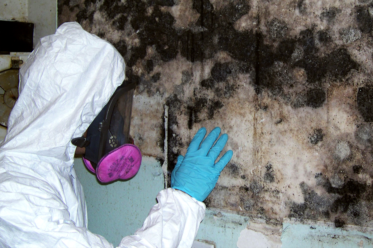 Mold Remediation & Removal Richmond Hill