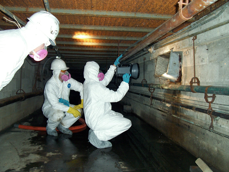 mold removal remidiation toronto gta